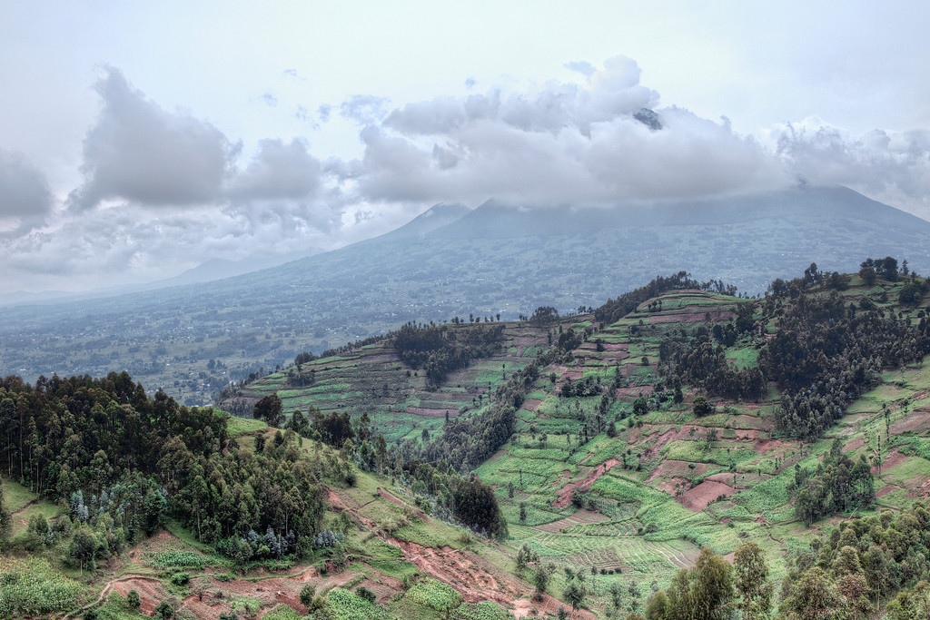 Typical Rwandan terraced farming in front of one of the volcanoes of Volcanoes National Park.