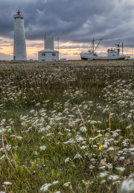 Field of white flowers blowing in the wind with lighthouse, building and boat on land in Icelandd of white flowers blowing in the wind with lighthouse, building and grounded boat in Iceland