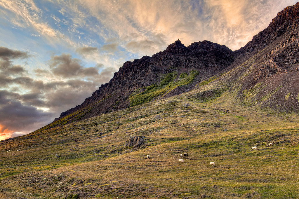 Sheep on the mountainside with green grass below and dramatic sky with clouds and orange sun in Iceland.