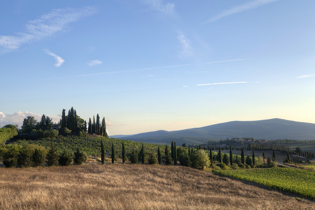 Tuscan countryside with vineyard and fallow field, pointy cypress trees and villa on the hill before a blue and gld sky