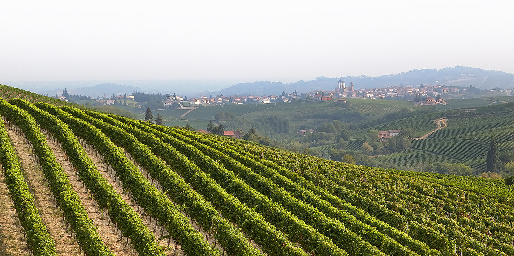 Hillside with rows of grape vines with the village of Fontanile and its Duomo in the distance and mountains and hazy sky in the Asti region of Piedmont.
