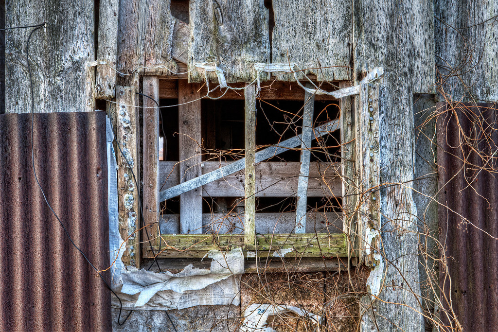 Boarded up window overgrown with dead vines set in dilapidated wall in Ontario Canada.