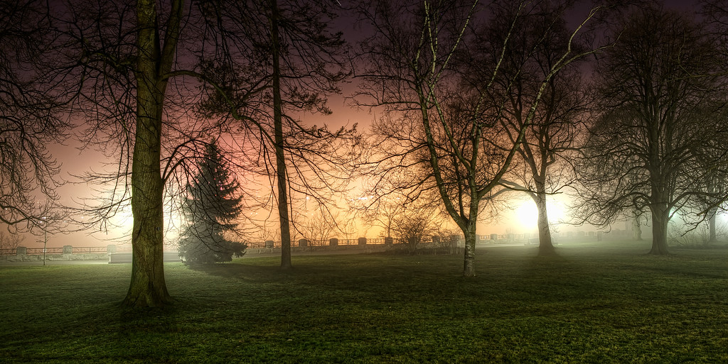 trees lit from behind in the mist at niagara falls at night