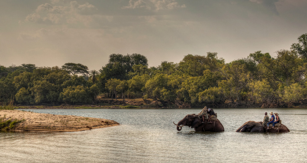 Two elephants with riders taking a swim in the Zambezi River in Zambia.
