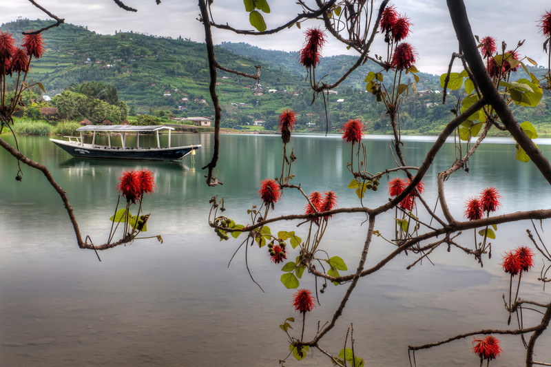 View from Paradis Malihide, Rwanda with flowers (umuko tree-a.k.a. flame tree) in the foreground, tour boat on the lake, and the green terraced hills in the distance.