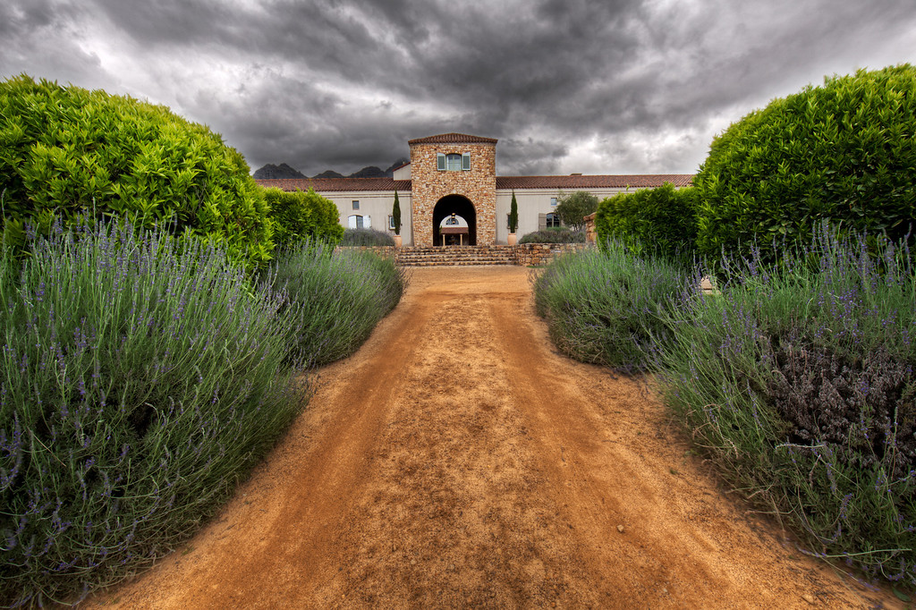 Brown dirt road flanked by lavender and greenery heading to the entrance of the Waterford winery in Capetown, South Africa.